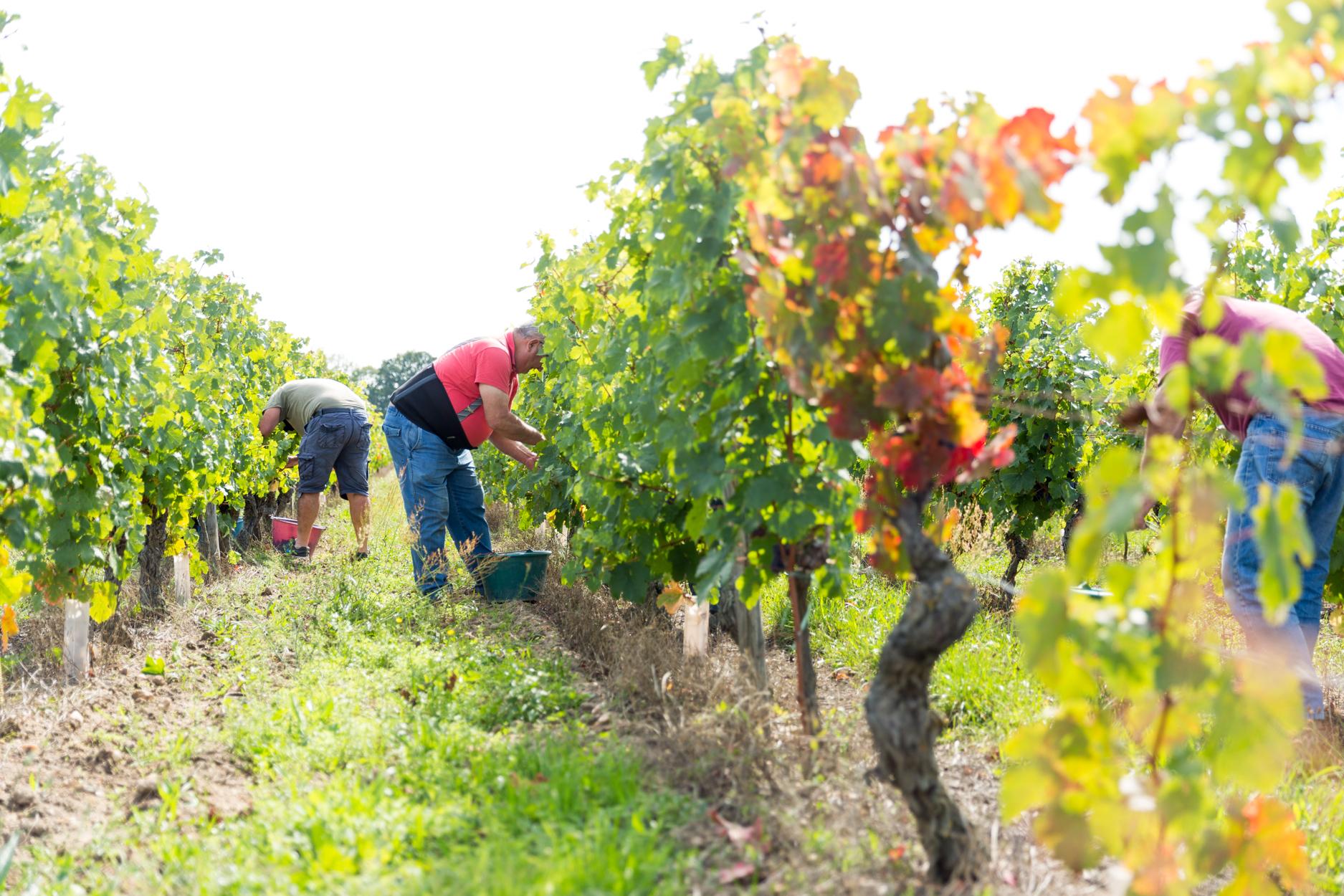 Domaine-caslot-Bourdin-Vin-de-Bourgueil-37-©gaellebc-JPGWEB-058