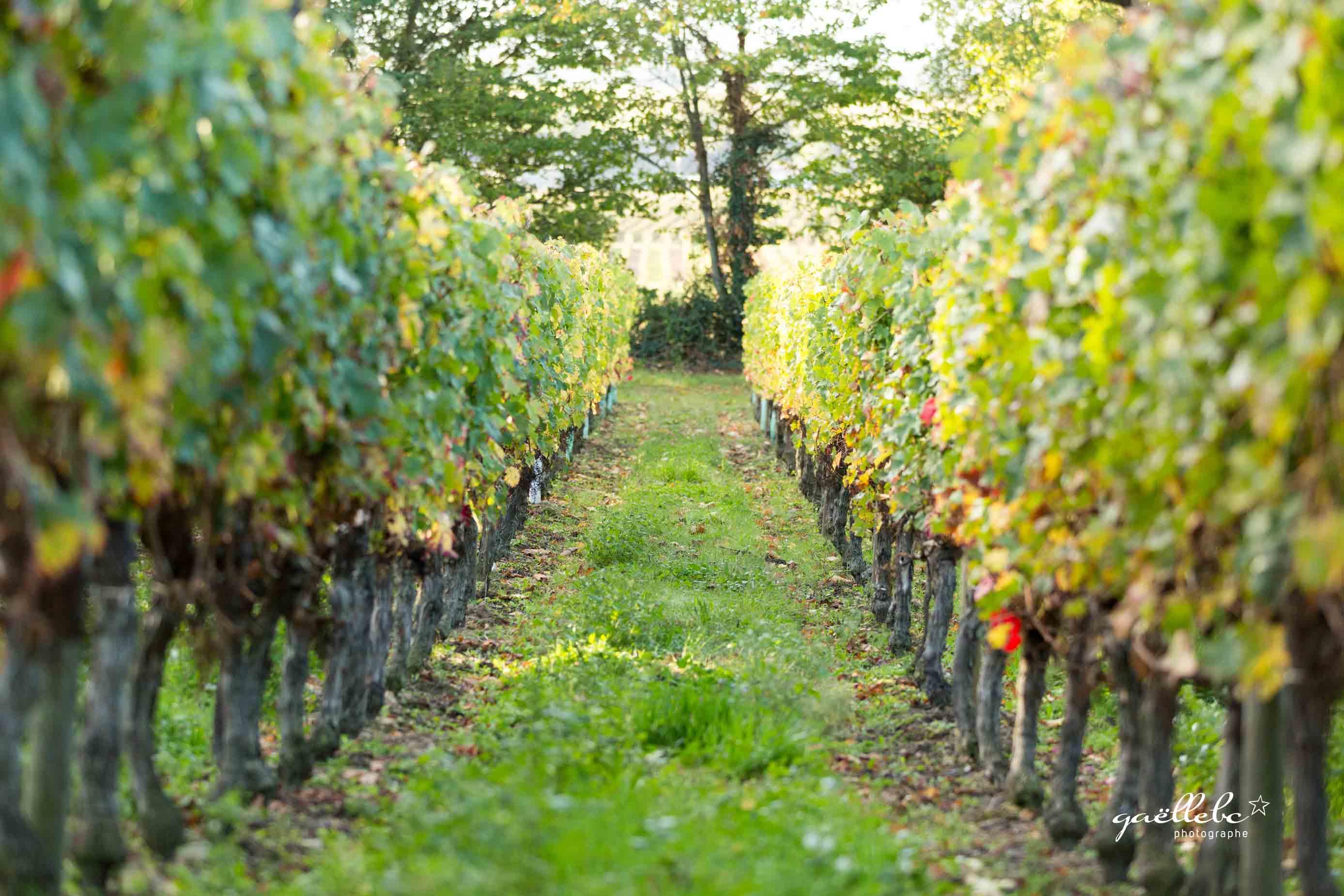 Seance-Photos-Azelie-entre-vignes-et-marche-©gaellebc-JPGweb-002